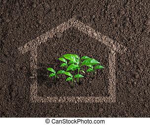 ecológico, vivo, casa, crecer, concepto