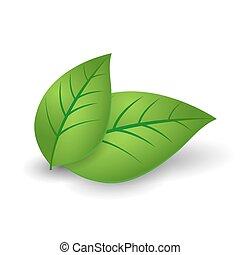 ecología, concepto, icono, con, brillante, hojas verdes