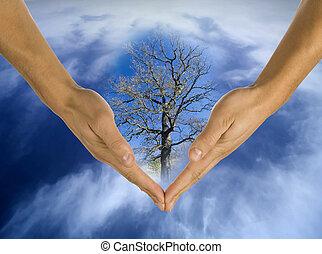 ecologia, mãos, responsabilidade, negócio