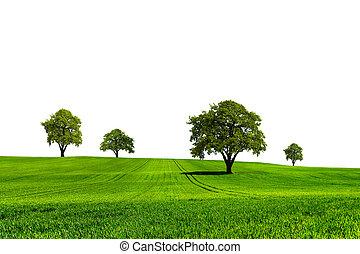 ecologia, verde, natura