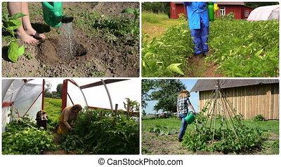 Ecologic gardening in rural farm. Footage collage.
