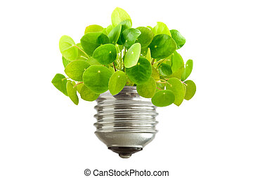 green plant growing out of a bulb