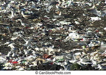 Sea gulls gorge themselves on debris mixed in the soil at a garbage landfill.