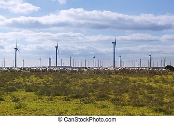 Ecological electric energy windmills in meadow