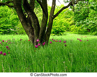 A superb looking meadow with bulb flowers in a park