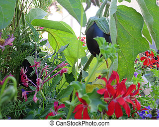 Ecological spontaneous vegetables arose spontaneously...