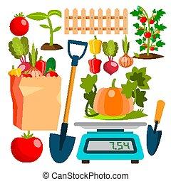 Ecological Vegetables Gardening Vegetable Garden Vector....
