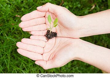 ecologisch, concept