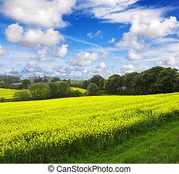 ecologisch, landbouw