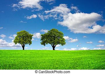 ecologisch, landscape
