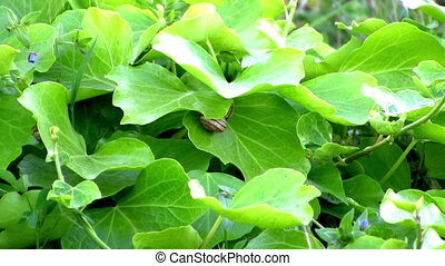 ecology concept, Green leaves
