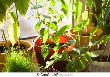Potted green plants on window sill indoors - Ecology concept...
