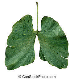 Ecology Lungs