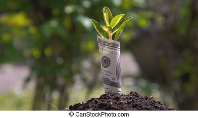 Economic Growth symbol one hundred with a plant or leaf growing out of the earth with blurred green background