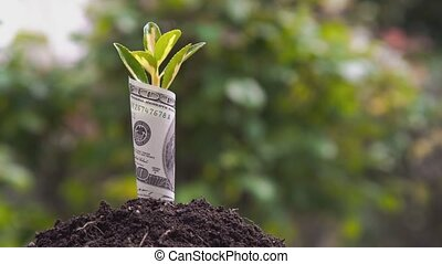 Economic Growth symbol one hundred dollar bill with a plant or leaf growing out of the earth with blurred green background