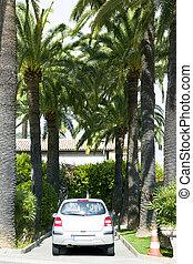 Economy car standing among palms