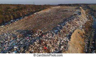 ecosystem., polluer, affamé, dumps, environment., oiseaux, destruction