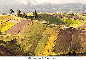 ecuador, altitudine alta, agricoltura