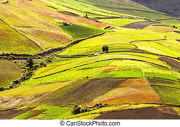 ecuador, altitudine alta, terreno coltivato