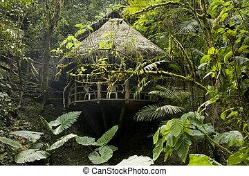 ecuatoriano, 670, cabaña, cloudforest
