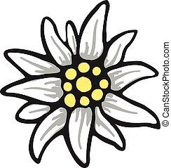 edelweiss, fleur, symbole, alpinism, alpes, allemagne, logo