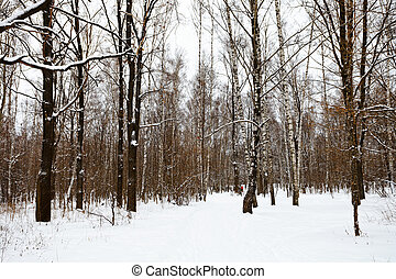 Edge of the snow covered forest