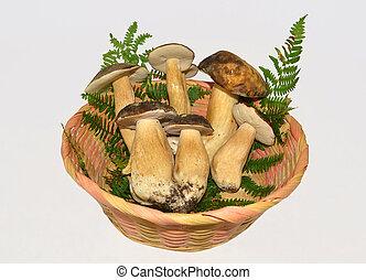 edible boletus mushrooms on white background