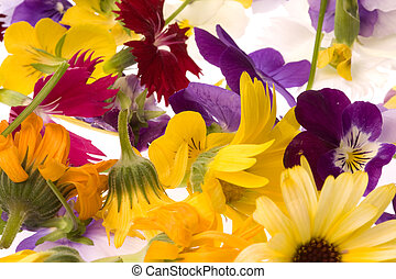 Edible Flowers Isolated - Isolated macro image of edible...