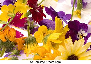 Isolated macro image of edible flowers.