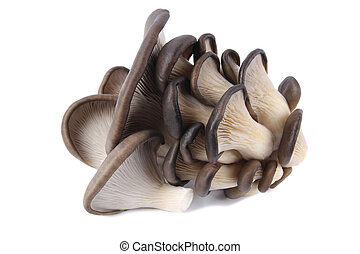 edible fungi mushrooms with white background