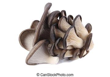 edible fungi mushrooms with white background