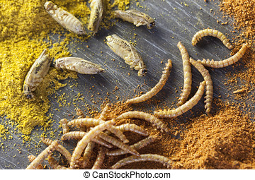 edible insects and spices - edible roasted mealworms and...