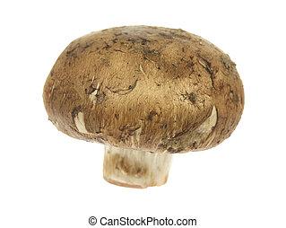 Edible Mushroom - A stock photo of an edible mushroom set...