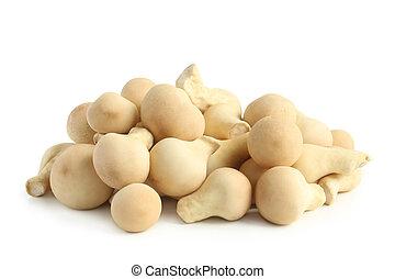 Edible mushroom Lycoperdon