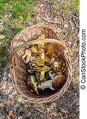 edible mushrooms in a basket