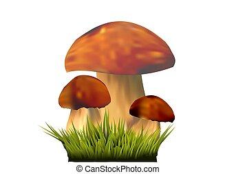 Edible mushrooms on grass, Boletus edulis isolated on the white background