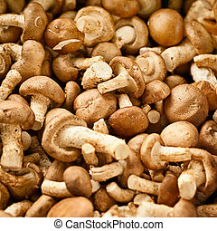 Edible mushrooms on the market
