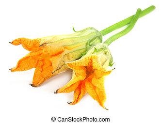 Edible pumpkin flower over white background