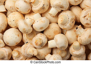 Edible raw white mushrooms (Agaricus bisporus)