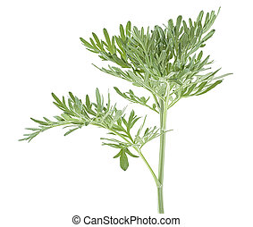 ?edicinal plant of wormwood isolated on a white background. ...