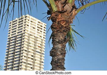 edificio, árbol, luego, otro, palma, cada, condo