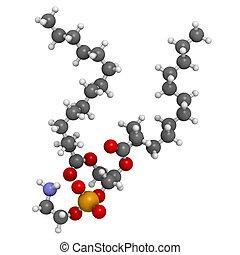 edificio, phosphatidylethanolamine, célula, membrana, (pe),...