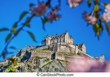 Edinburgh castle with spring tree in Scotland