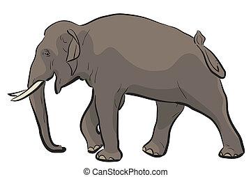 Asian elephant - Editable vector illustration of a walking ...
