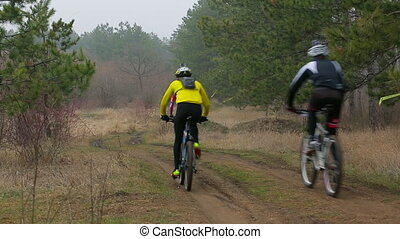 EDITORIAL. Group Of Three Cyclists Moving In The Distance In Pine Forest