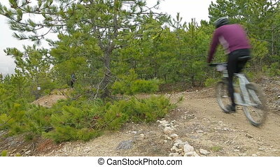 EDITORIAL. Two Bikers Moving Downhill In Pine Forest -...