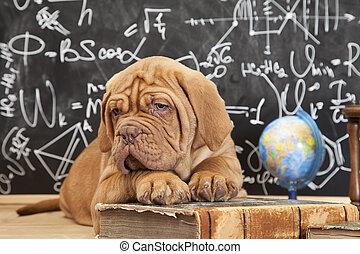 educação, cão