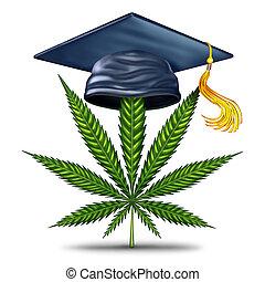educação, marijuana