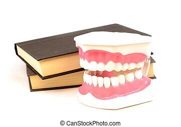 educação, saúde, oral