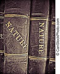 educación, libros, en, un, biblioteca